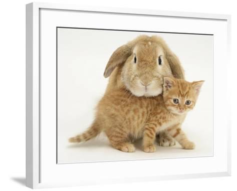 British Shorthair Red Spotted Kitten with Sandy Lop Rabbit-Jane Burton-Framed Art Print