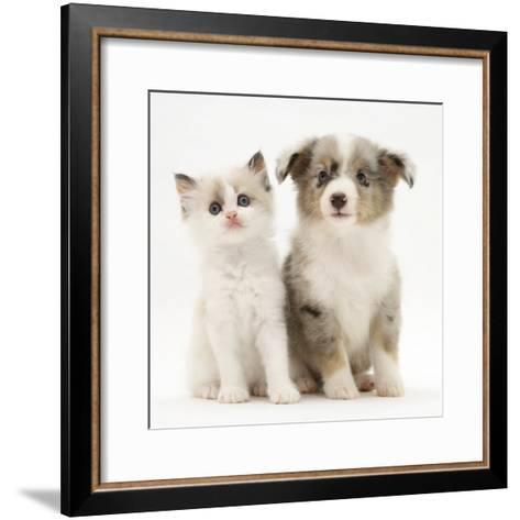 Birman-Cross Kitten Sitting with Blue Merle Shetland Sheepdog Pup-Jane Burton-Framed Art Print