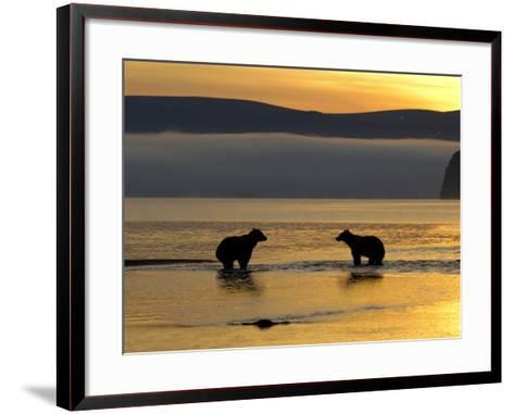 Brown Bears in Water at Sunrise, Kronotsky Nature Reserve, Kamchatka, Far East Russia-Igor Shpilenok-Framed Art Print