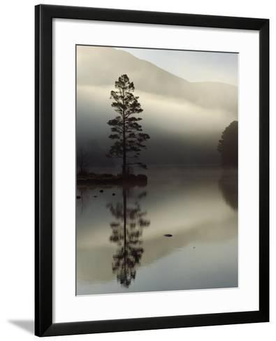 Scots Pine Tree Reflected in Lake at Dawn, Loch an Eilean, Scotland, UK-Pete Cairns-Framed Art Print