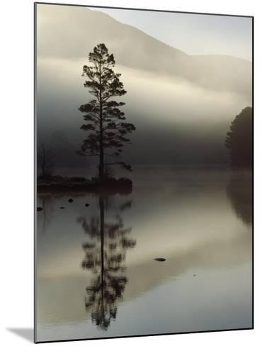 Scots Pine Tree Reflected in Lake at Dawn, Loch an Eilean, Scotland, UK-Pete Cairns-Mounted Photographic Print