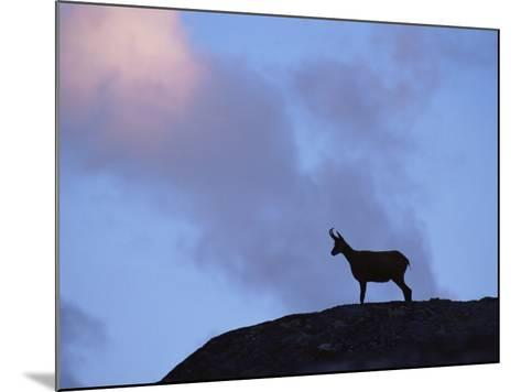 Chamois (Rupicapra Rupicapra) Silhouetted, Gran Paradiso National Park, Italy-Tim Edwards-Mounted Photographic Print