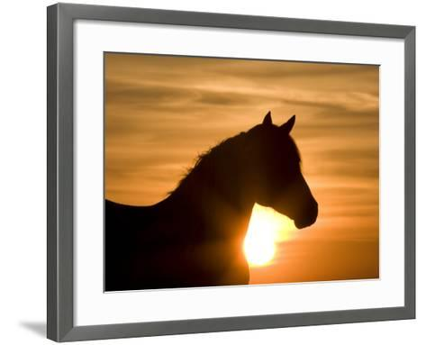 Silhouette of Wild Horse Mustang Pinto Mare at Sunrise, Mccullough Peaks, Wyoming, USA-Carol Walker-Framed Art Print