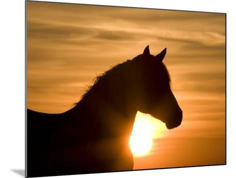 Silhouette of Wild Horse Mustang Pinto Mare at Sunrise, Mccullough Peaks, Wyoming, USA-Carol Walker-Mounted Photographic Print