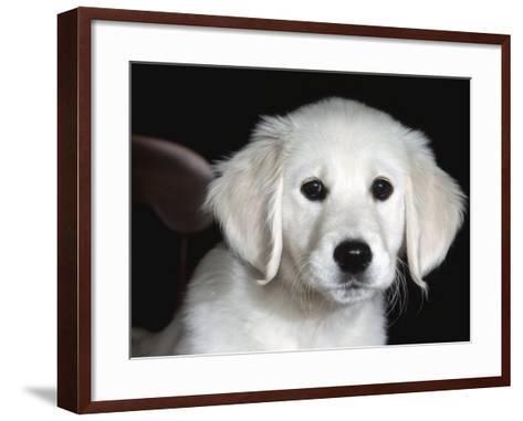 Golden Retriever Puppy-Lynn M^ Stone-Framed Art Print