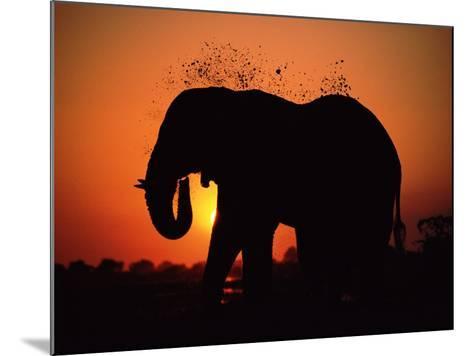 African Elephant Dusting Itself at Dusk, Chobe National Park, Botswana, Southern Africa-Tony Heald-Mounted Photographic Print