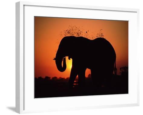African Elephant Dusting Itself at Dusk, Chobe National Park, Botswana, Southern Africa-Tony Heald-Framed Art Print