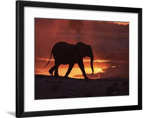 African Elephant, at Sunset Chobe National Park, Botswana-Tony Heald-Framed Art Print