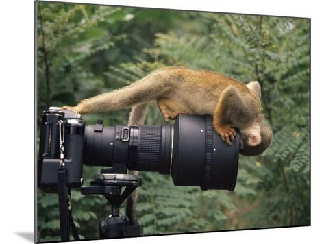 Squirrel Monkey, Investigates Camera, Amazonia, Ecuador-Pete Oxford-Mounted Photographic Print