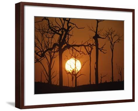 Sunset in Tropical Rainforest after Destruction by Fire, Brazil-Martin Dohrn-Framed Art Print