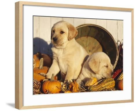 Golden Labrador Retriever Puppies, USA-Lynn M^ Stone-Framed Art Print