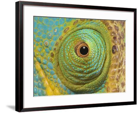 Male Parson's Chameleon, Close up of Eye, Ranomafana National Park, South Eastern Madagascar-Nick Garbutt-Framed Art Print