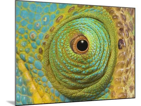 Male Parson's Chameleon, Close up of Eye, Ranomafana National Park, South Eastern Madagascar-Nick Garbutt-Mounted Photographic Print