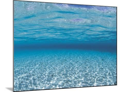 Sandy Seabed Underwater View, Indo-Pacific-Jurgen Freund-Mounted Photographic Print