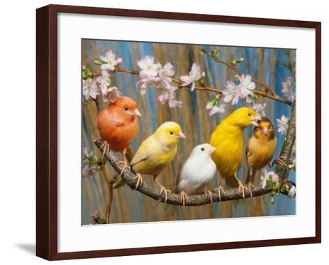 Five Canaries of Different Colours-Reinhard-Framed Art Print