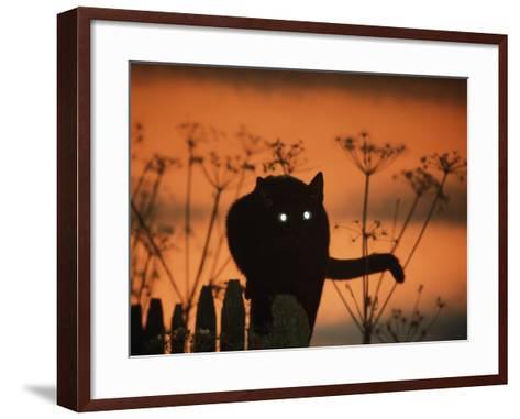 Black Domestic Cat Silhouetted Against Sunset Sky, Eyes Reflecting the Light, UK-Jane Burton-Framed Art Print