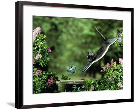 Domestic Cat Leaping at Coal Tit on Bird Bath-Jane Burton-Framed Art Print