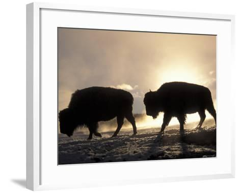 Two Bison Silhouetted Against Rising Sun, Yellowstone National Park, Wyoming, USA-Pete Cairns-Framed Art Print