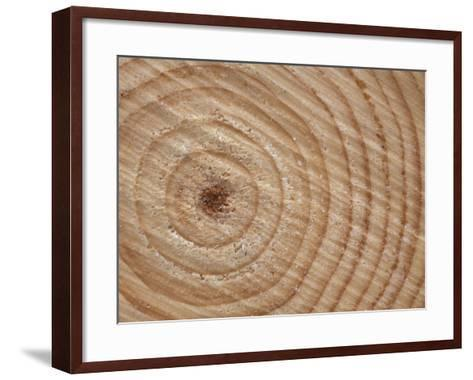 Growth Rings in Trunk of Spruce Tree, Norway-Pete Cairns-Framed Art Print