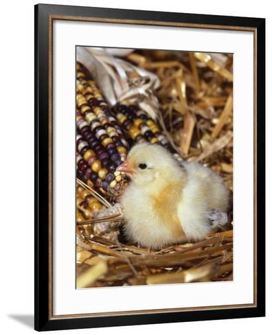 Domestic Chicken Chick-Lynn M^ Stone-Framed Art Print