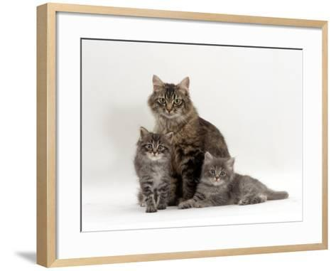 Domestic Cat, Fluffy Tabby with Her Two Kittens-Jane Burton-Framed Art Print