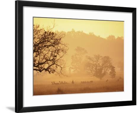 Chital Deer (Axis Axis) at Dawn, Kanha National Park, Madhya Pradesh, India-Pete Oxford-Framed Art Print
