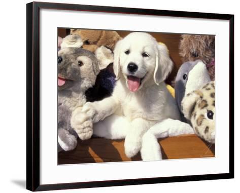 Golden Retriever Puppy with Toys-Lynn M^ Stone-Framed Art Print