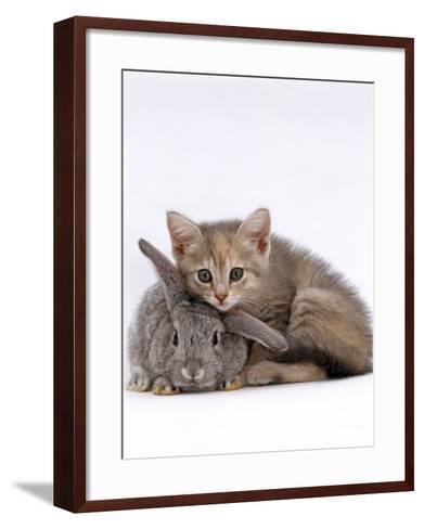 Domestic Cat, Silver Tortoiseshell Kitten with Silver Dwarf Lop Eared Rabbit-Jane Burton-Framed Art Print