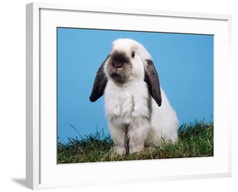 Lop-Eared Dwarf Rabbit-Petra Wegner-Framed Art Print