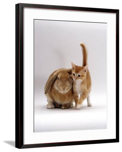 Domestic Cat, Ginger Female with Young Sandy Lop Eared Rabbit, Colour Coordinated-Jane Burton-Framed Art Print