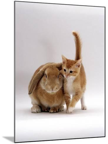 Domestic Cat, Ginger Female with Young Sandy Lop Eared Rabbit, Colour Coordinated-Jane Burton-Mounted Photographic Print