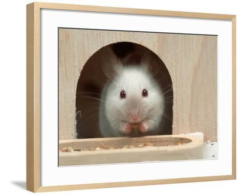 White Mouse in Hutch-Petra Wegner-Framed Art Print