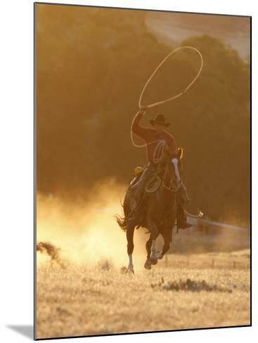 Cowboy Galloping While Swinging a Rope Lassoo at Sunset, Flitner Ranch, Shell, Wyoming, USA-Carol Walker-Mounted Photographic Print