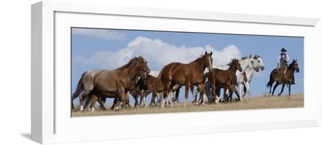 Cowboy Herding Quarter Horse Mares and Foals, Flitner Ranch, Shell, Wyoming, USA-Carol Walker-Framed Art Print