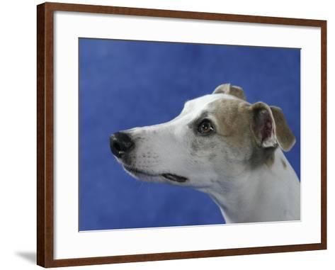 Head of Whippet Dog-Petra Wegner-Framed Art Print
