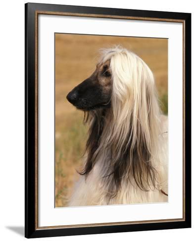 Afghan Hound Profile-Adriano Bacchella-Framed Art Print