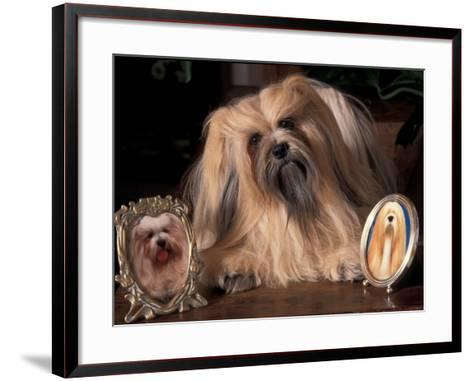 Lhasa Apso with Framed Pictures of Other Lhasa Apsos-Adriano Bacchella-Framed Art Print