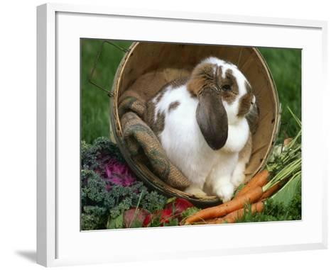 French Lop Eared Rabbit in a Tub-Lynn M^ Stone-Framed Art Print