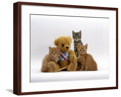 Domestic Cat, Two Ginger Kittens and a Tabby with Ginger Teddy Bear-Jane Burton-Framed Art Print