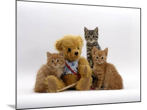 Domestic Cat, Two Ginger Kittens and a Tabby with Ginger Teddy Bear-Jane Burton-Mounted Photographic Print