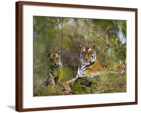 Female Tiger, with Four-Month-Old Cub, Bandhavgarh National Park, India-Tony Heald-Framed Art Print