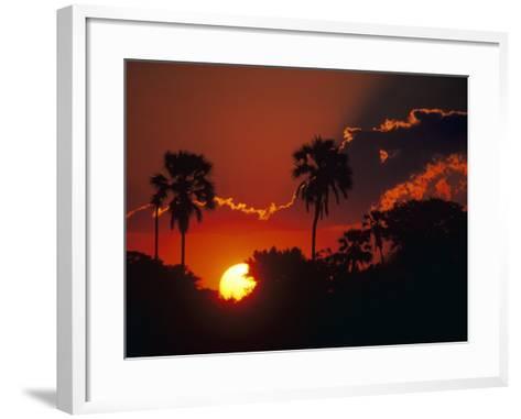 Palm Trees Silhouetted at Sunset, Okavango Delta, Botswana-Pete Oxford-Framed Art Print