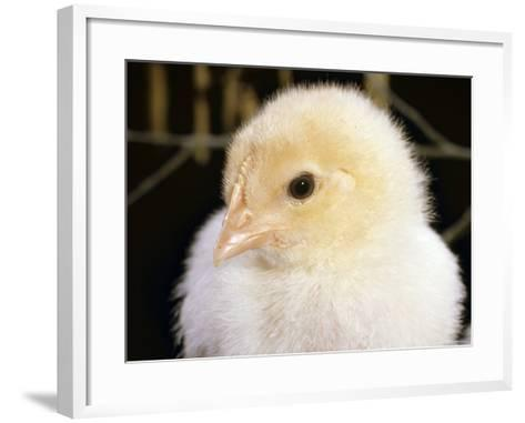 Portrait of a Chick, 3-Week-Old-Jane Burton-Framed Art Print