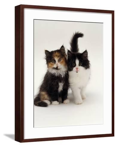 Domestic Cat, Tortoiseshell and Black-And-White Kittens-Jane Burton-Framed Art Print