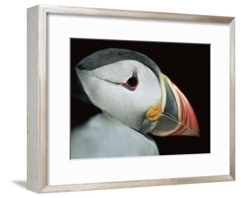 Puffin Portrait, Runde, Norway-Bence Mate-Framed Art Print