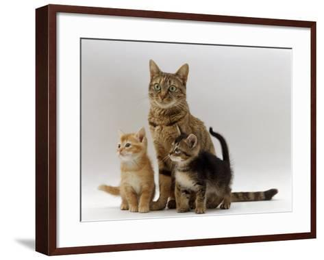Domestic Cat, with Two of Her 6-Week Kittens-Jane Burton-Framed Art Print