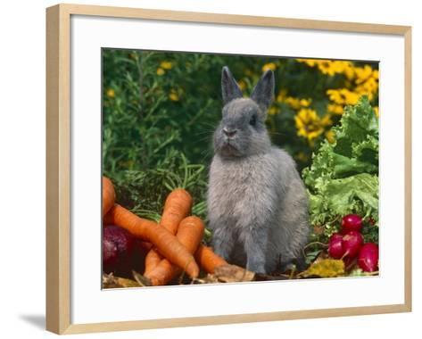 Domestic Netherland Dwarf Rabbit Amongst Vegetables, USA-Lynn M^ Stone-Framed Art Print