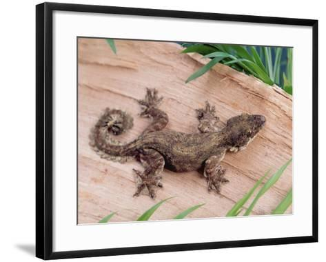 Flying Gecko-Steimer-Framed Art Print