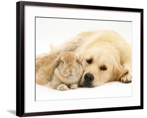 Sandy Lop Rabbit Resting with Golden Retriever Bitch-Jane Burton-Framed Art Print