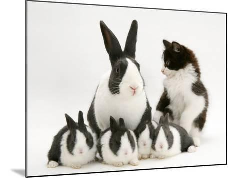Blue Dutch Rabbit and Four 3-Week Babies and Black-And-White Kitten-Jane Burton-Mounted Photographic Print